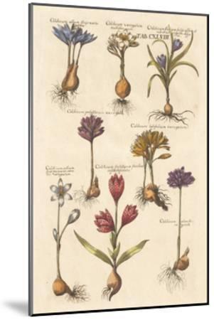 Vintage Florilegium I-Wild Apple Portfolio-Mounted Art Print