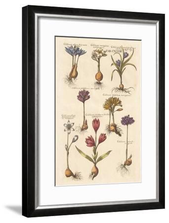 Vintage Florilegium I-Wild Apple Portfolio-Framed Art Print