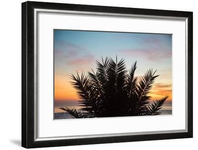 Sunset Palms II-Laura Marshall-Framed Art Print