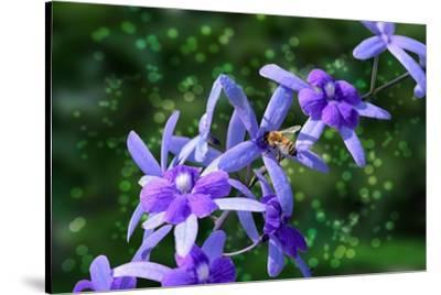 Bee and Purple Flowers-Don Spears-Stretched Canvas Print