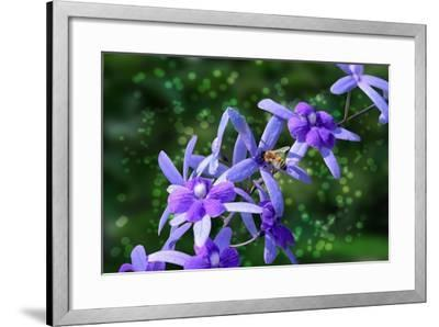 Bee and Purple Flowers-Don Spears-Framed Art Print