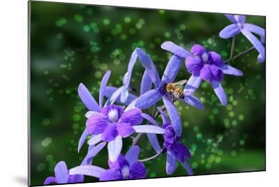 Bee and Purple Flowers-Don Spears-Mounted Art Print