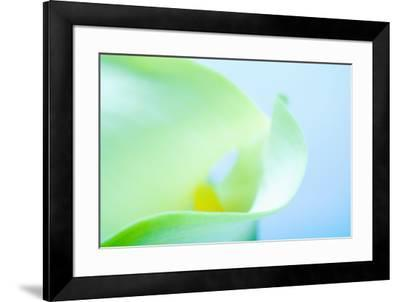 Close-up of a Calla Lily flower--Framed Photographic Print