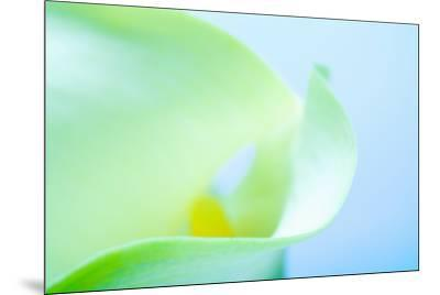 Close-up of a Calla Lily flower--Mounted Photographic Print