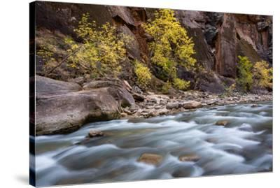 River flowing through rocks, Zion National Park, Utah, USA--Stretched Canvas Print