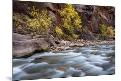 River flowing through rocks, Zion National Park, Utah, USA--Mounted Photographic Print