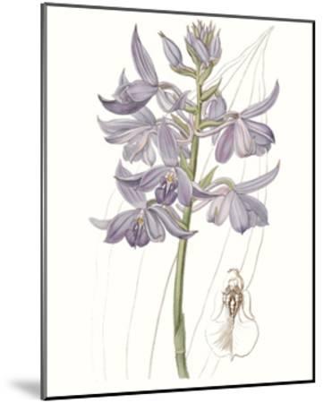 Lavender Beauties III--Mounted Art Print