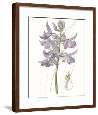 Lavender Beauties III--Framed Art Print