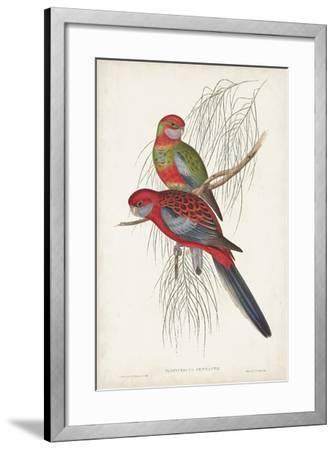 Tropical Parrots III-John Gould-Framed Art Print