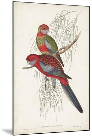 Tropical Parrots III-John Gould-Mounted Art Print