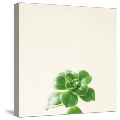 Succulent Simplicity VII Neutral-Felicity Bradley-Stretched Canvas Print