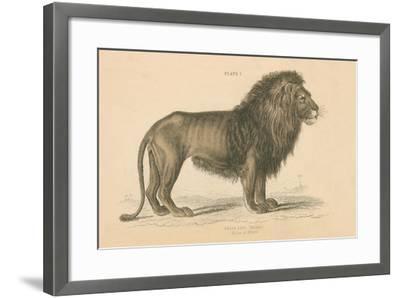 Vintage Lion-Wild Apple Portfolio-Framed Art Print