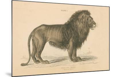 Vintage Lion-Wild Apple Portfolio-Mounted Art Print