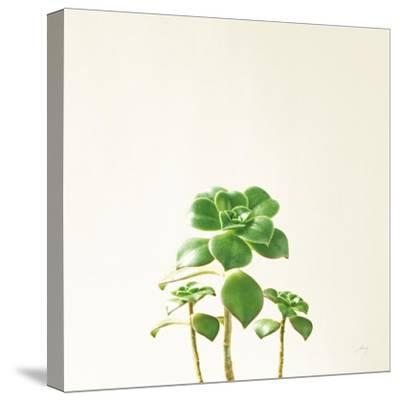 Succulent Simplicity IX Neutral-Felicity Bradley-Stretched Canvas Print