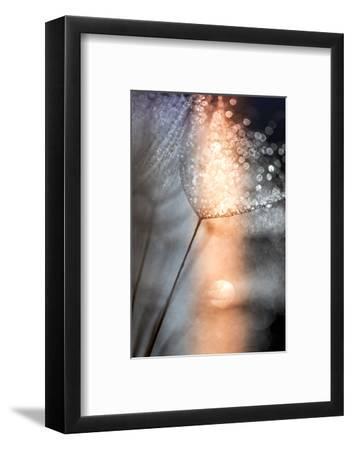 In My Winter Window-Ursula Abresch-Framed Photographic Print