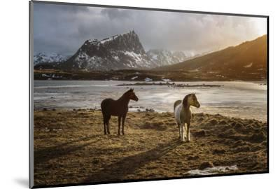 Lofoten Horses-Marco Carmassi-Mounted Photographic Print