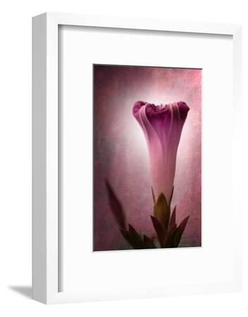 Lantern-Philippe Sainte-Laudy-Framed Photographic Print