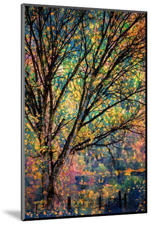 Kootenay Fall 3-Ursula Abresch-Mounted Photographic Print