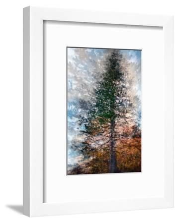 Fir-Ursula Abresch-Framed Premium Photographic Print