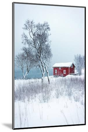 Alone in White-Philippe Sainte-Laudy-Mounted Photographic Print