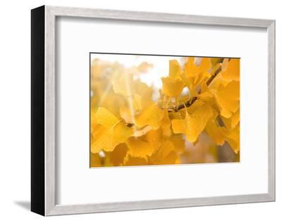 Suns Have Gone-Philippe Sainte-Laudy-Framed Photographic Print