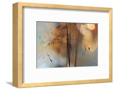 Single Drop Fall-Heidi Westum-Framed Photographic Print