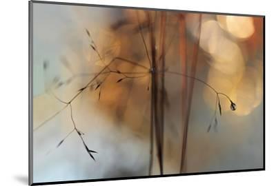 Single Drop Fall-Heidi Westum-Mounted Photographic Print