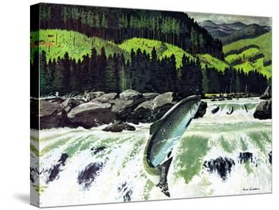 Salmon Run-Fred Ludekens-Stretched Canvas Print
