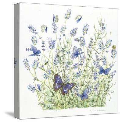 Lavender-Janneke Brinkman-Salentijn-Stretched Canvas Print