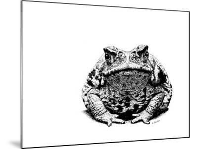 Z21 Toad-Let Your Art Soar-Mounted Giclee Print