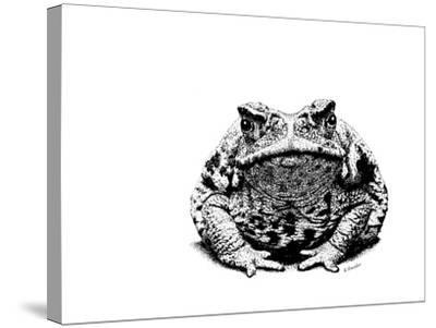 Z21 Toad-Let Your Art Soar-Stretched Canvas Print