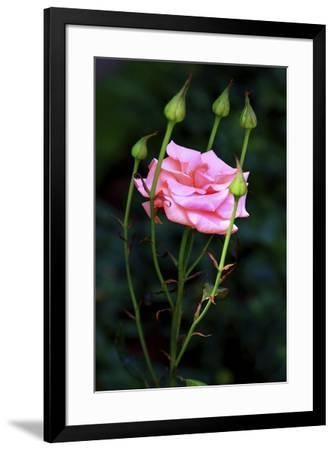 4585 16x26-The Lieberman Collection-Framed Giclee Print