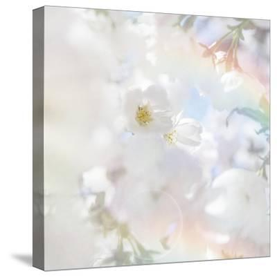Apple Blossoms 03-LightBoxJournal-Stretched Canvas Print