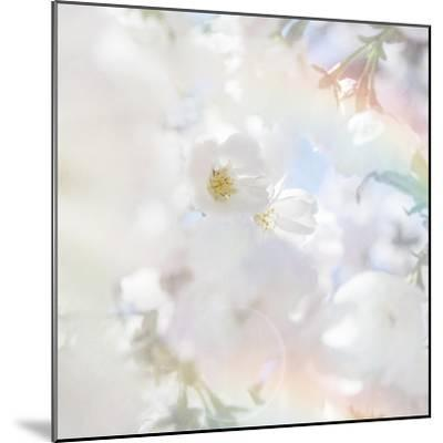 Apple Blossoms 03-LightBoxJournal-Mounted Giclee Print