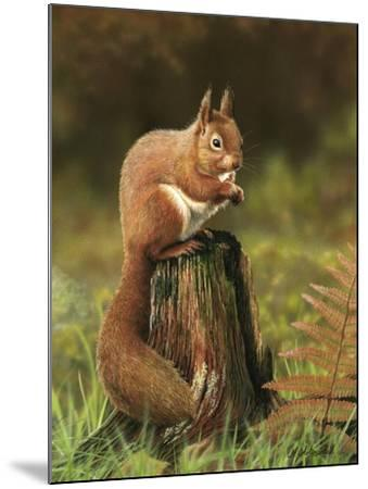 Red Squirrel 5753-Nigel Artingstall-Mounted Giclee Print