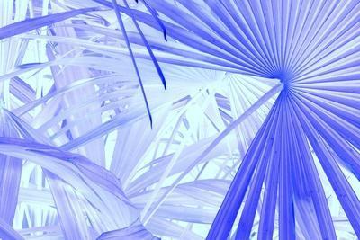 _DSC0010-Tom Kelly-Framed Giclee Print