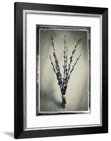 Pussy Willow 04-Tom Quartermaine-Framed Giclee Print