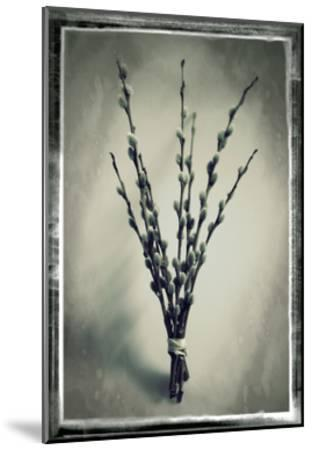 Pussy Willow 04-Tom Quartermaine-Mounted Giclee Print