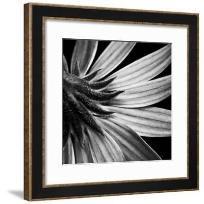 Reverse Of Flower Bw-Tom Quartermaine-Framed Giclee Print