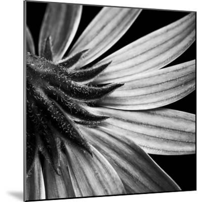Reverse Of Flower Bw-Tom Quartermaine-Mounted Giclee Print