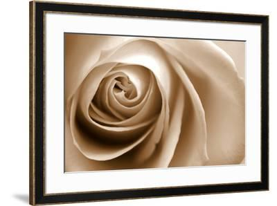 Sepia Rose 01-Tom Quartermaine-Framed Giclee Print