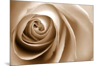 Sepia Rose 01-Tom Quartermaine-Mounted Giclee Print