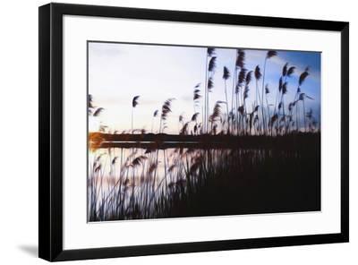 Digital art phragmites in blue sky sunset-Anthony Paladino-Framed Giclee Print