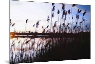 Digital art phragmites in blue sky sunset-Anthony Paladino-Mounted Giclee Print