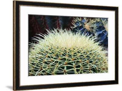 The Barrel Cactus-Anthony Paladino-Framed Giclee Print