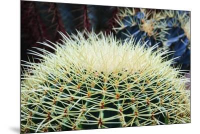 The Barrel Cactus-Anthony Paladino-Mounted Giclee Print