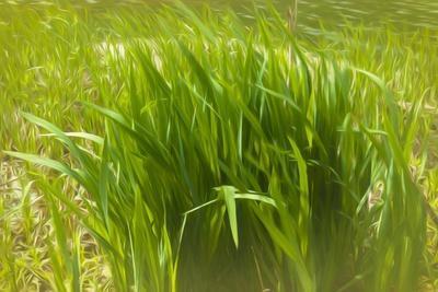 Reeds Along Seacoast-Anthony Paladino-Framed Giclee Print