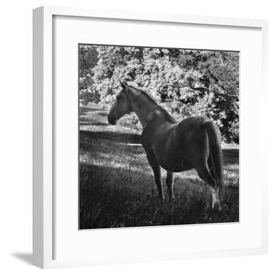 White Mare-Brenda Petrella Photography LLC-Framed Giclee Print