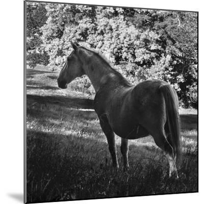 White Mare-Brenda Petrella Photography LLC-Mounted Giclee Print