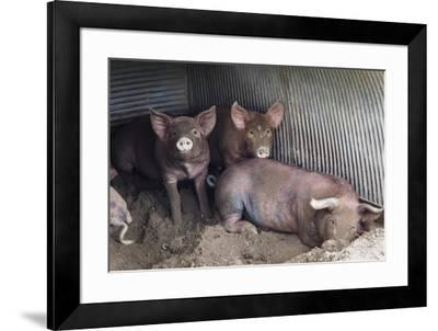 Wilbur And Company-Brenda Petrella Photography LLC-Framed Giclee Print